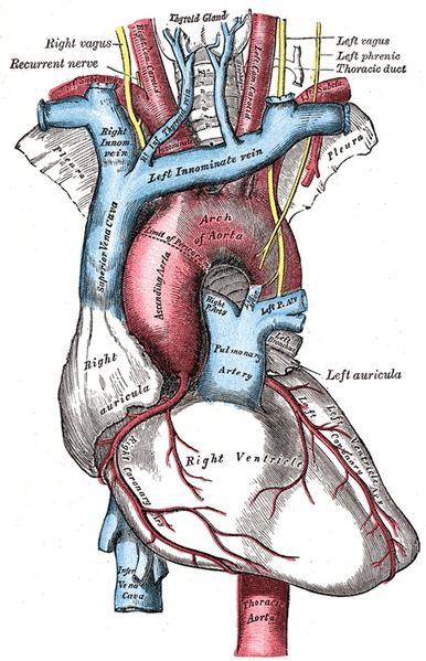 Yoga, Herz und Blutdruck – Handverlesene Lesetipps