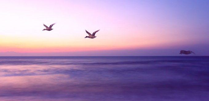 Yoga-für-den-klaren-Geist-und-ruige-Gedanken-lila