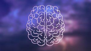 Nasenzyklus, Nasenloch und Gehirnhälfte