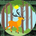 Im Wald kann man prima Pranayama üben und die Atemwege stärken