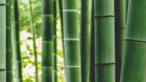 Yoga für die Gelenke: Bambus-Yoga für Knie und Hüften