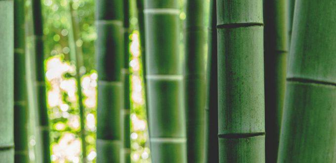 Bambus-Yoga-für-die-Gelenke-sanft-dynamisch_blogHeader